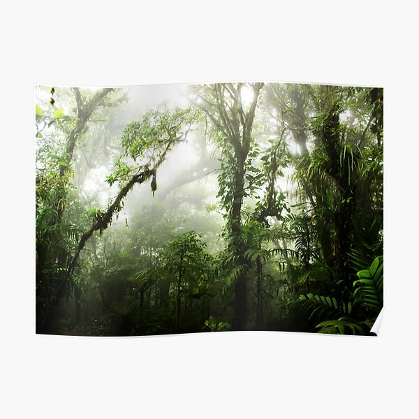 Cloud Forest Poster