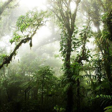 Bosque nuboso de Nicklas81