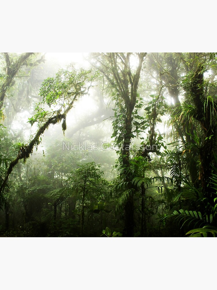 Cloud Forest by Nicklas81