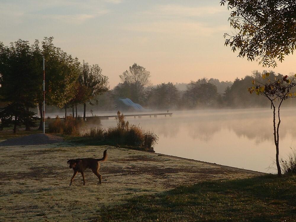 Misty morning, dog by Weddel