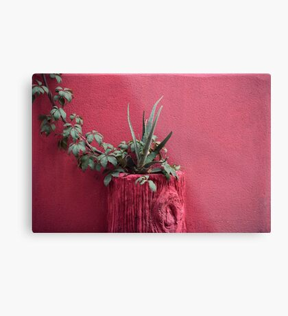 Rosa und Pflanze Metallbild