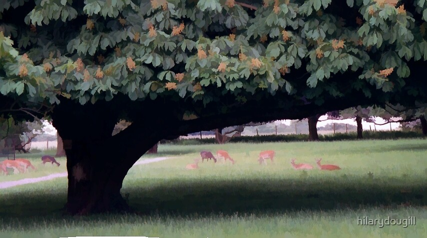 Deer in the Park by hilarydougill