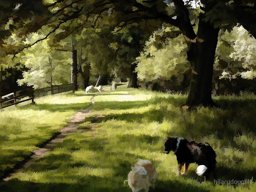 Sheep may safely graze by hilarydougill