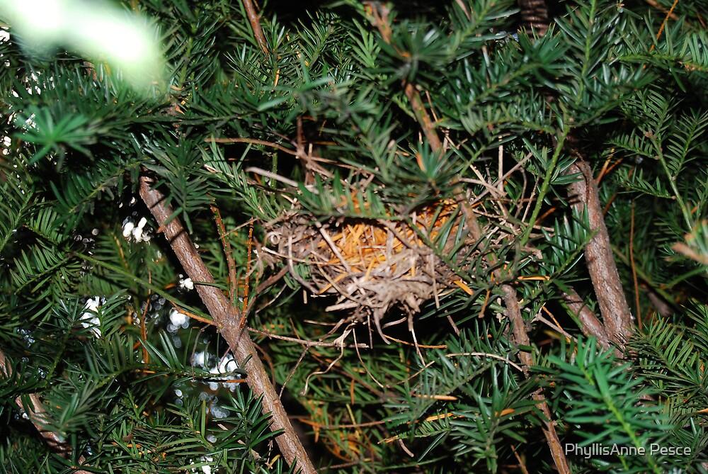 Birds nest by PhyllisAnne Pesce
