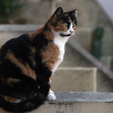I am watching you by sbosic