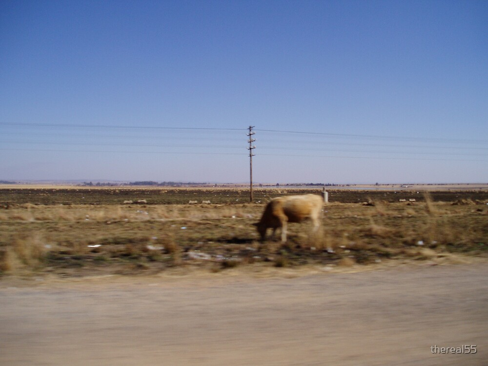 roadside cow by thereal55