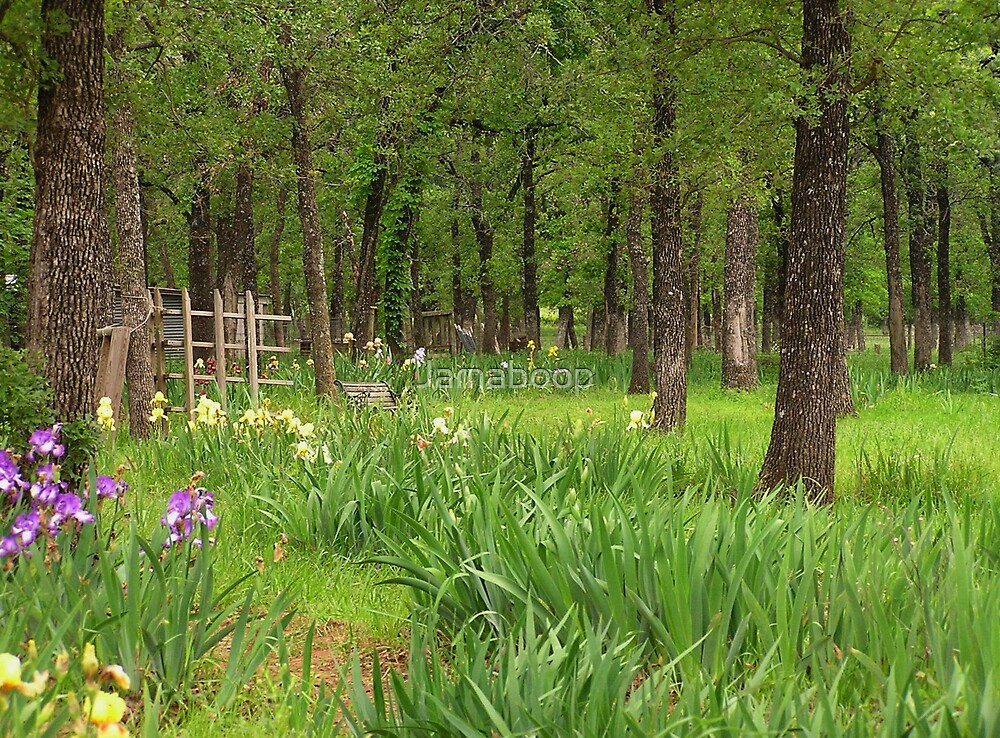 The Iris Farm (Texas) by Jamaboop