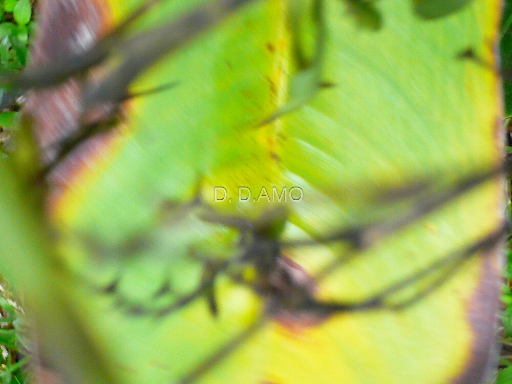 Nature abstracted by D. D.AMO