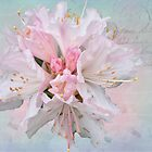 Rhododendron Beauty by Cynthia Harris