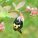 I'm A Little Bumble Bee by RickDavis