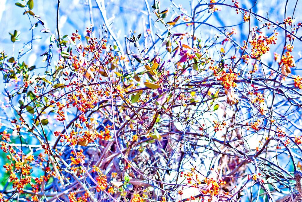 Tangled Berries by Rod  Adams