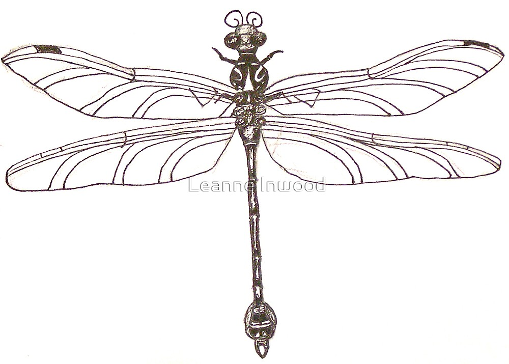 small dragonfly by Leanne Inwood