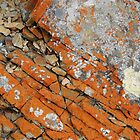 Patterns and Surfaces, Arthur River, Tasmania, Australia. by kaysharp