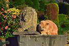Two Lions by Michael Haslam