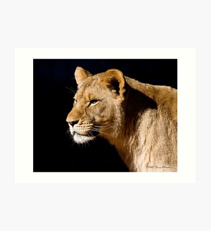 Young Lioness Art Print