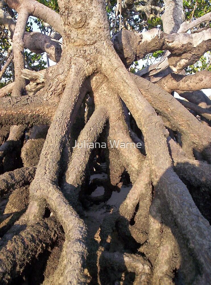 Roots by Juliana Warne
