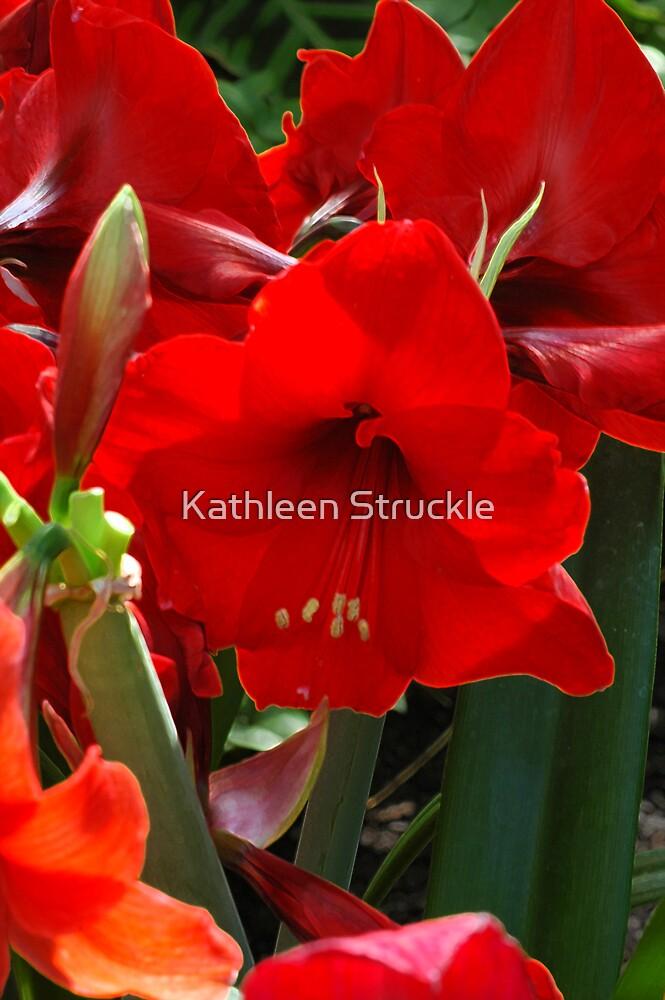 Red Ladies by Kathleen Struckle
