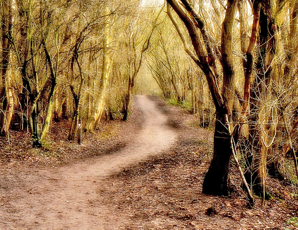 Woodland Walk. by mariarty