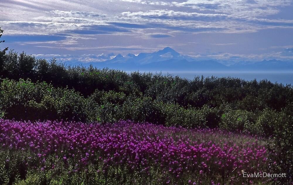 Pink Alaska by EvaMcDermott