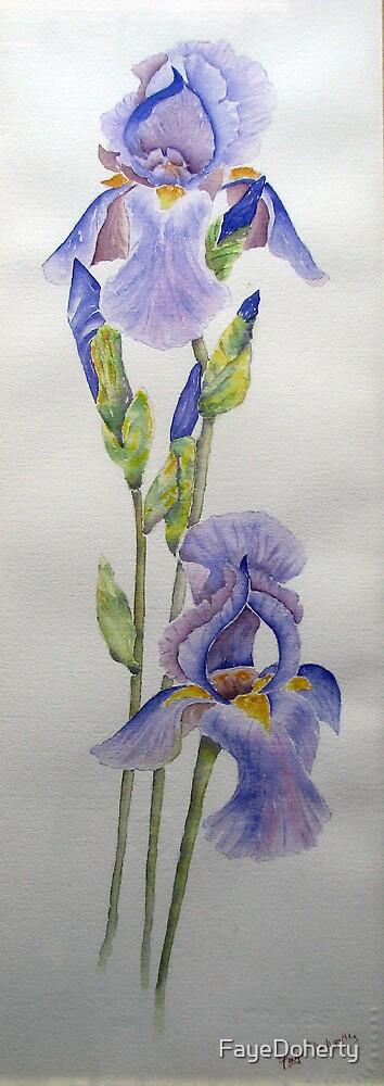 My beautiful irises by FayeDoherty