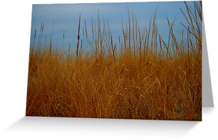 Dune Grass in Winter by Sharon Ulrich