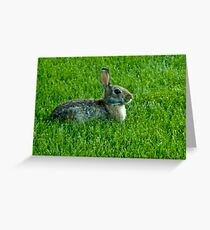Our Backyard Bunny Greeting Card