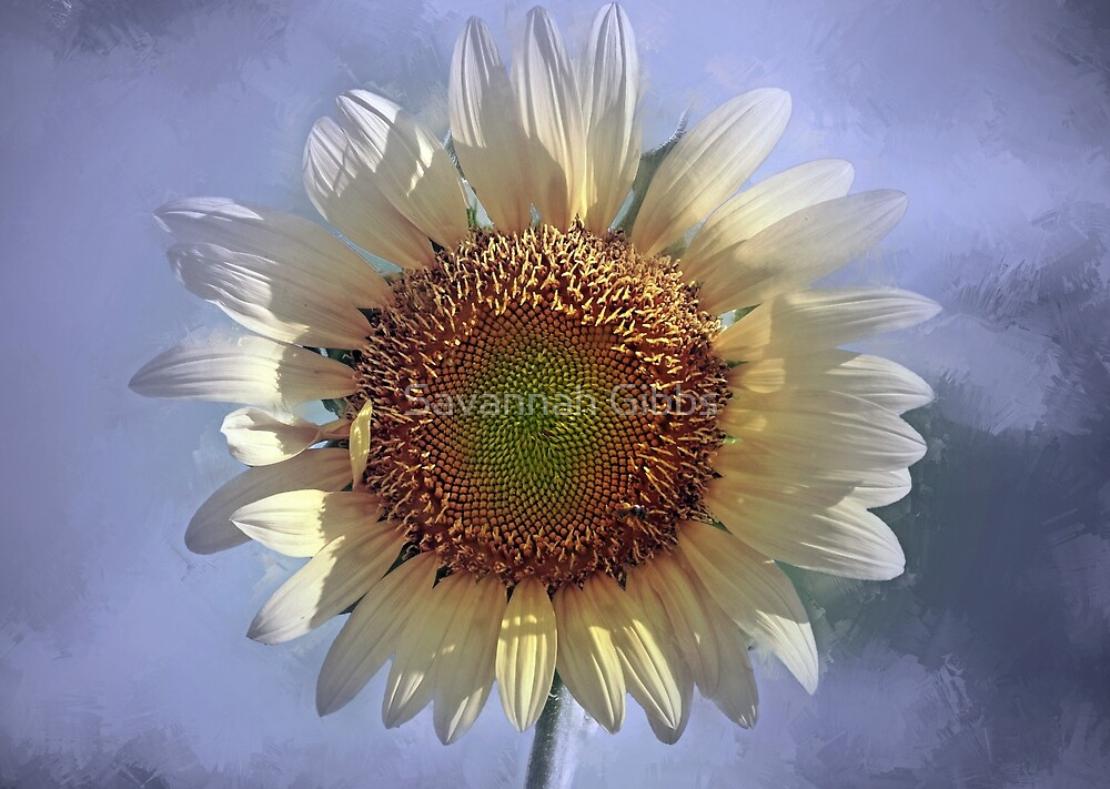 Sunflower by Savannah Gibbs