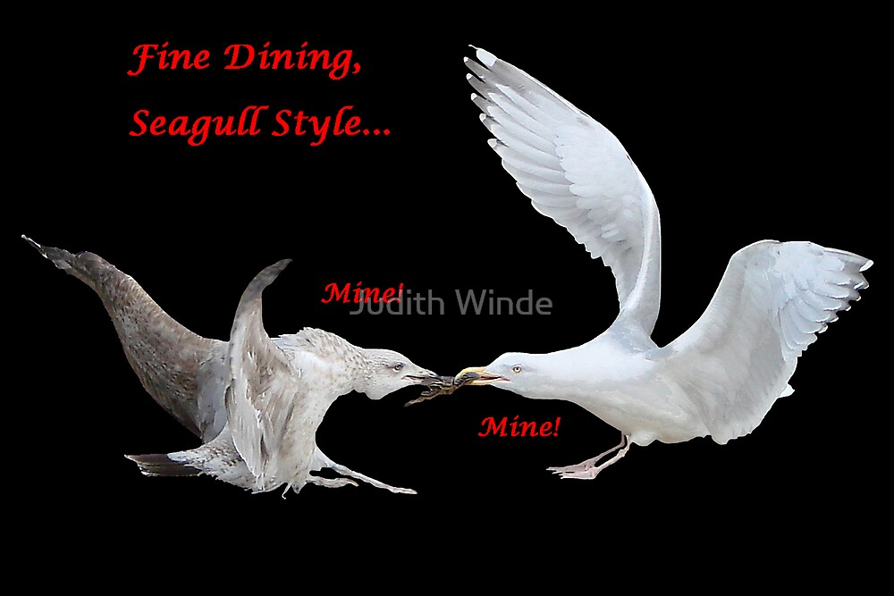Fine Dining, Seagull Style card by Judith Winde