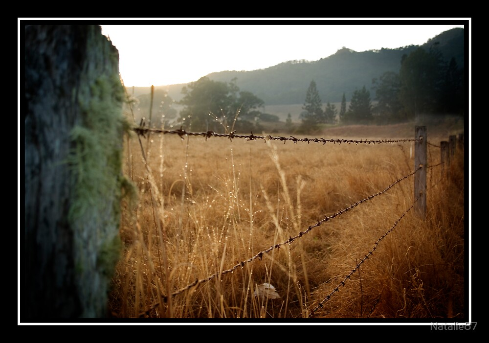 Barb Wire Fence by Natalie87