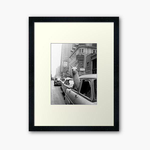 Lama - NYC Framed Art Print