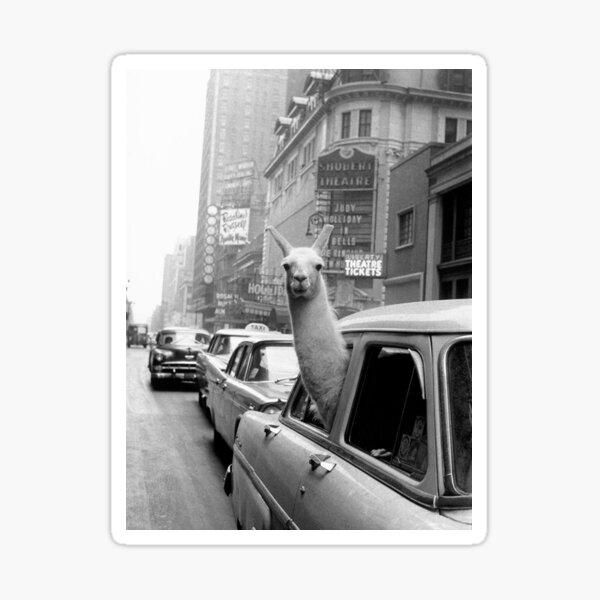 Lama - NYC Sticker
