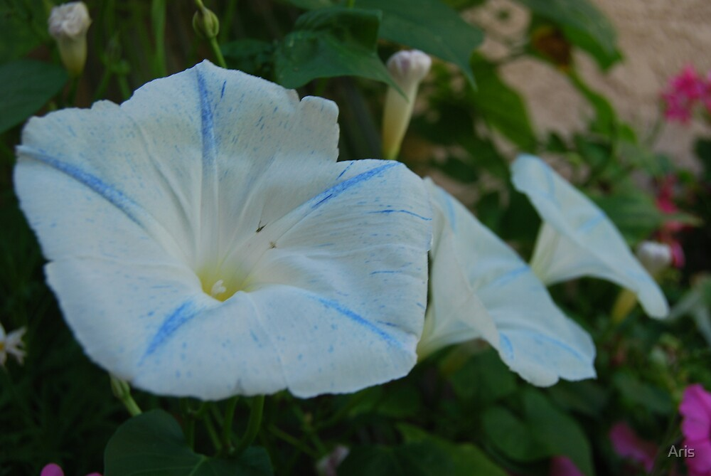 Mom's Flowers by Aris