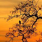 Sunset Hawks by Laura Puglia