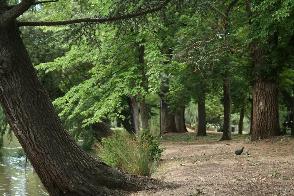 botanic gardens by sherryn pitt