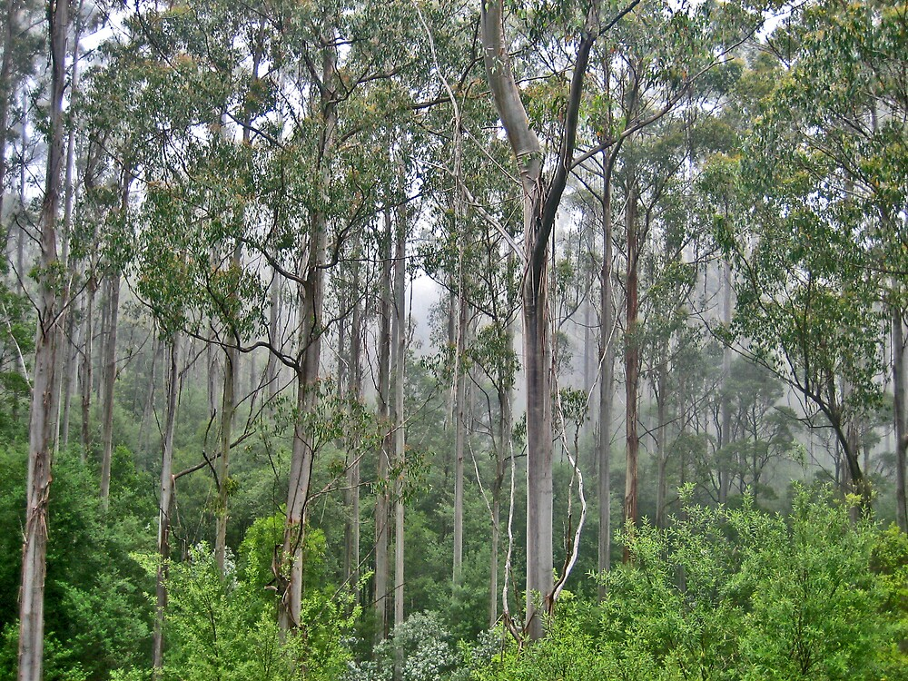 Forest fancy by Gayathri  Ramachandran