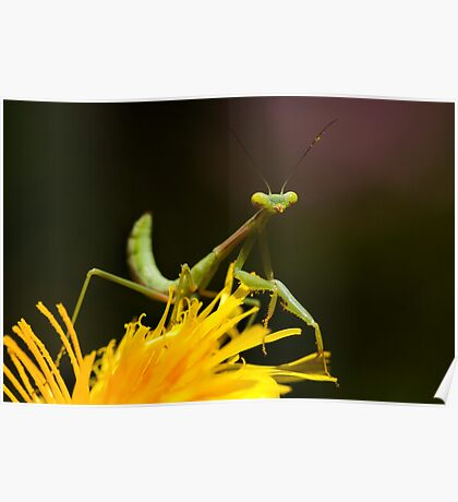 Green on Yellow Poster
