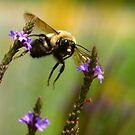 BEE TWEEN FLOWERS by clou2