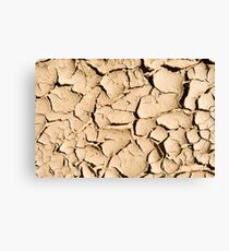 Mud Cracks Canvas Print