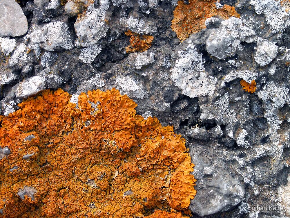 Orange and Grey Lichen #2 by syman