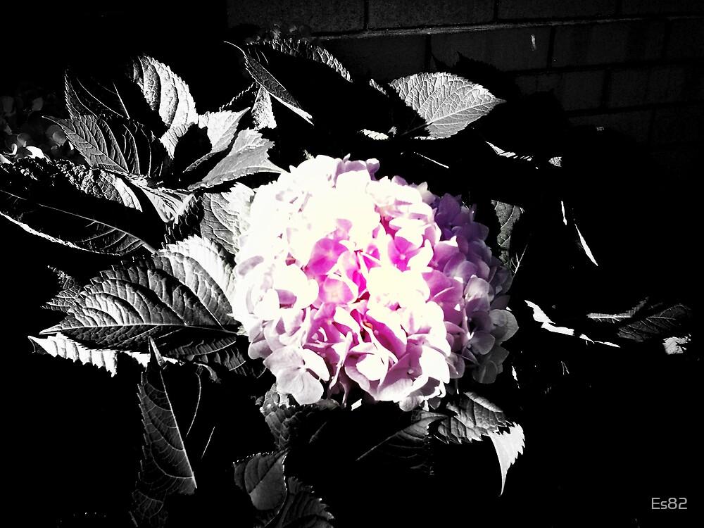 Flower Cloud... by Es82