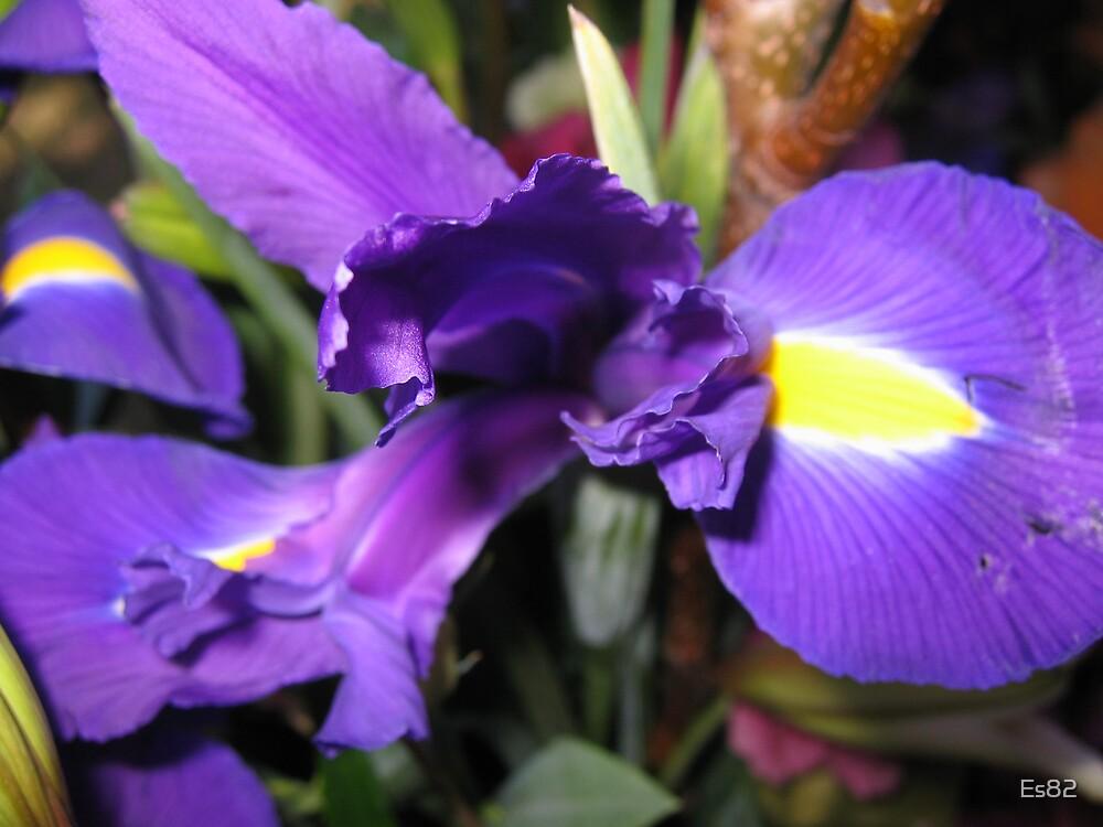 Iris by Es82