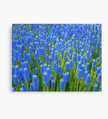 A Sea of Blue Canvas Print