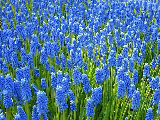 A Sea of Blue by ienemien