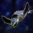 Sea Turtle by Savannah Gibbs