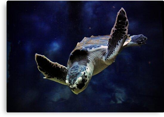 Sea Turtle by Savannah Gibbs