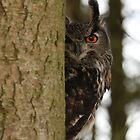 Eye Spy by Heather King