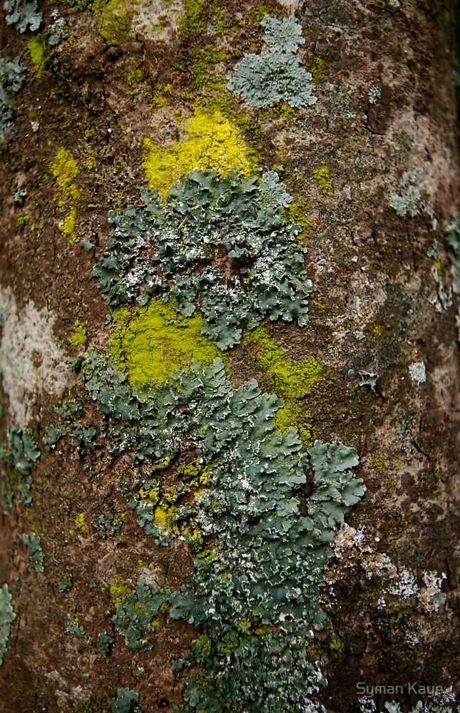 Lichen Covered Bark by syman