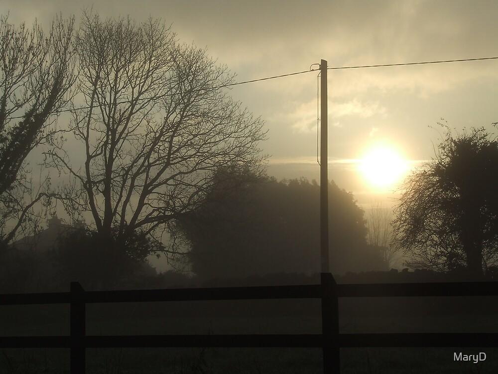 Foggy Morning by MaryD