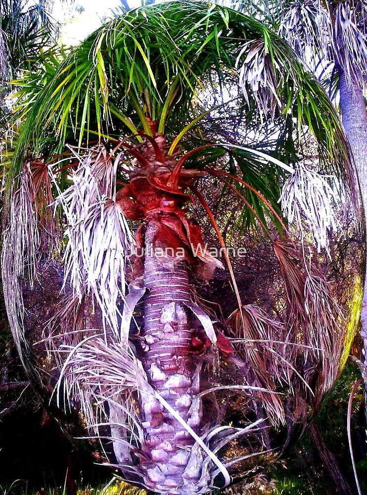Cooloola Island Palm by Juliana Warne
