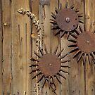 Metal Flowers by Jill Doyle